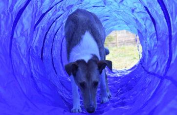Orimattilan Pakaalle avataan koirien huvipuisto