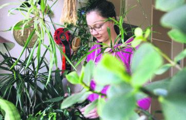 Huonekasvien harrastaminen rönsyilee